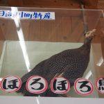 SanPin中津 ほろほろ鳥の剥製