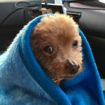 あらぎの里 毛布をかぶるマオ
